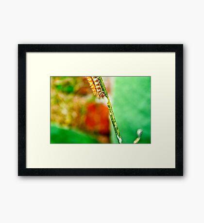 The Hungry Little Caterpillar.. Framed Print
