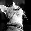 a dear little kitten by Clare Colins