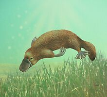 Platypus Life Cycle - Young Platypus swimming freely by Karen  Hull