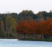 Fall colors  by Jellybean720