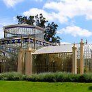 Adelaide Botanical Gardens by Ali Brown