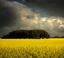 Canola and storm clouds by Hans Kawitzki
