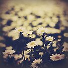Dusty Daisies by KirstyStewart