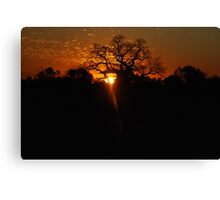 Old Boab at Sunset Canvas Print