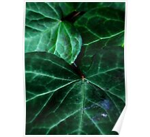 Green Ivy Poster