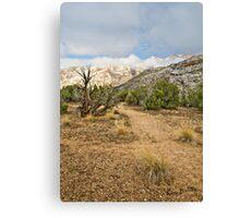 Split Mountain Path Canvas Print