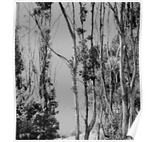 Through the trees in black and white Poster
