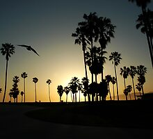 A Lone Seagull by joAnn lense