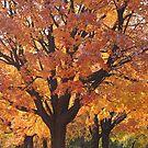 The Beauty of Fall by Nanagahma