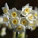 Jonquils White and Yellow by Joy Watson
