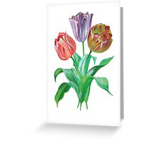 Tulip Trio Tee Greeting Card