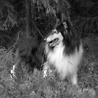 Collie in Autumn 2 by CitC