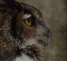 Great Horned Owl by Judi Taylor