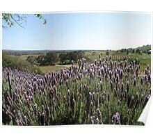 Vista across Barossa Valley, from Bethany Winery Poster