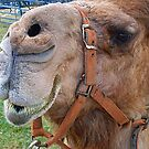 Camel >> by JuliaWright