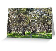 Sugar Gums - Eyre Peninsula Greeting Card
