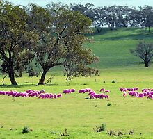 Breast Cancer Aware Sheep (please view larger) by elsha