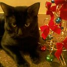 holiday cat by catnip addict manor