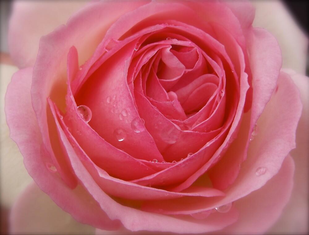 Pink Gems. by Gabrielle  Hope