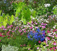 A Garden Full of Color by Caren