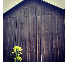 Distressed Old Barn with Yellow Wildflower Photographic Print