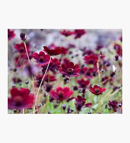 Dancing Cosmos Photographic Print