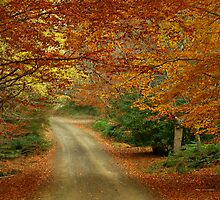 Follow me down the Autumn trail  by Sim Baker