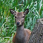 Doe by Elaine123