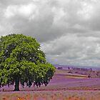 Oak Tree of Lavender Life  by Sim Baker