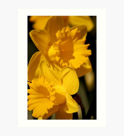 Daffy Pair 1 Art Print