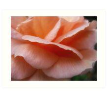 Peach Petals  Macro  Dads rose Art Print