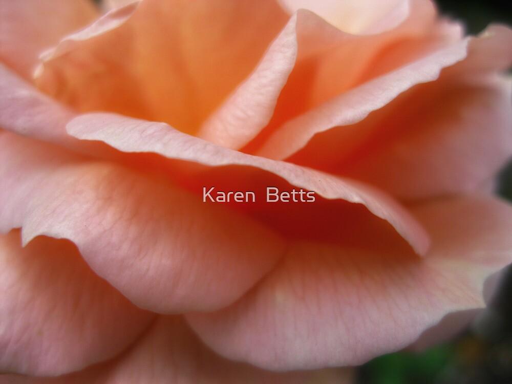 Peach Petals  Macro  Dads rose by Karen  Betts