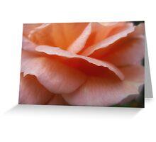 Peach Petals  Macro  Dads rose Greeting Card