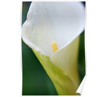 Green lily I Poster