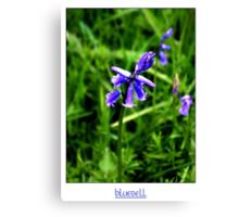 Bluebell #2 Canvas Print