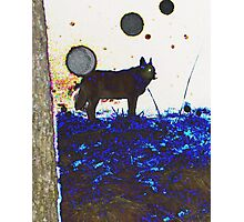 Top Dog And Orbs At Midnight Photographic Print