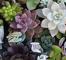 Suuculents by tylerelyssa