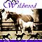 Wildwood Quarterhorses by Wendy  Slee