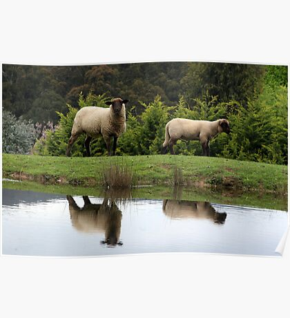 Farmyard Reflections Poster