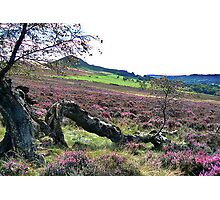 Hawnby Moor Photographic Print