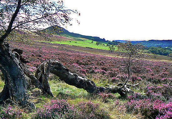 Hawnby Moor by Trevor Kersley