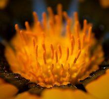 Wildflower 3 by Emjay01