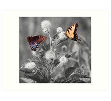 Butterflies gathering nectar Art Print