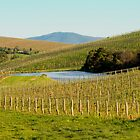 Wine Country - Yarra Valley by Mark Elshout
