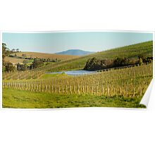 Wine Country - Yarra Valley Poster