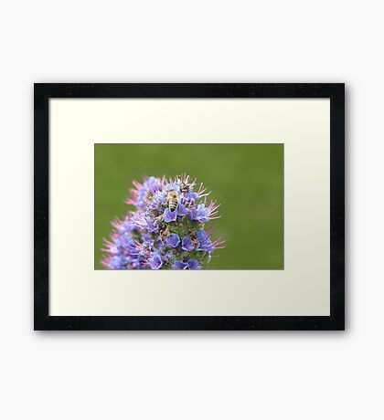 Buzzing about with purple and green Framed Print