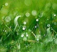Twinkling grass by Hetty Mellink