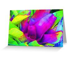 Bromeliad Glow 2 Greeting Card