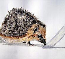 """Earnest"" - Hedgehog by Timothy Smith"