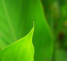 Green Leaf by maritescabaral